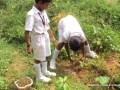amrita-budding-farmers-sweating-their-way